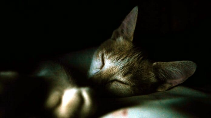 Besser einschlafen: Auf dem Bild eine schlafende Katze