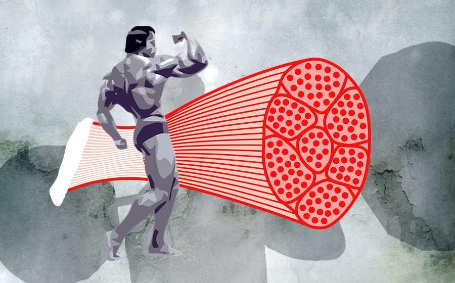 Was ist Muskelhypertrophie?