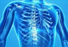 Illustration eines menschlichen Skelettes