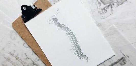 Skizzierte Wirbelsäule auf einem Blatt Papier