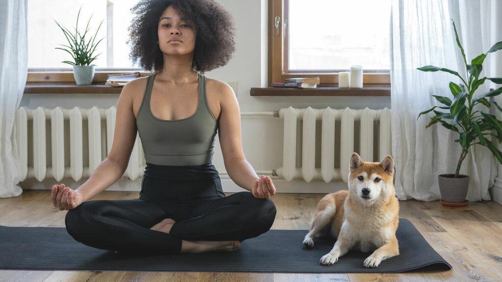 Frau die unter den wachsamen Augen ihres Hundes Yoga praktiziert