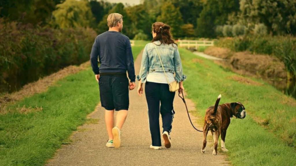 Paar beim Spaziergang mit Hund. Eine von vielen Möglichkeiten für mehr Bewegung im Alltag
