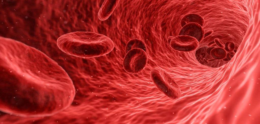 Blutplättchen bahnen sich den Weg durch den Körper (Symbolbild)